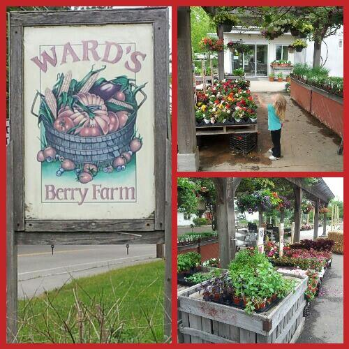 Wards Berry Farm
