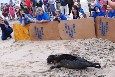 Seal release at Scusset