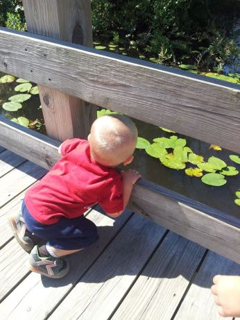 Looking for frogs and turtles
