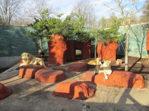 Lions,_Capron_Park_Zoo,_Attleboro_MA
