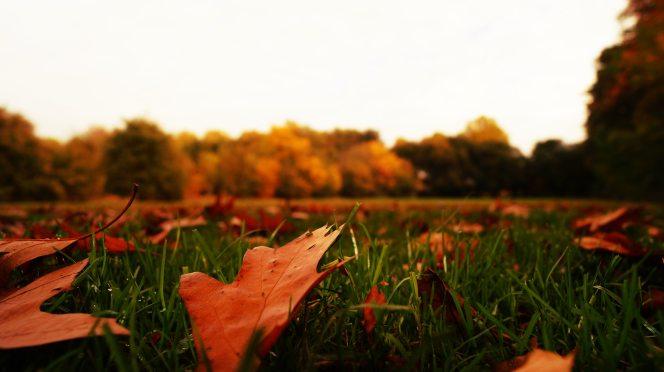autumn-autumn-leaves-blur-217027.jpg
