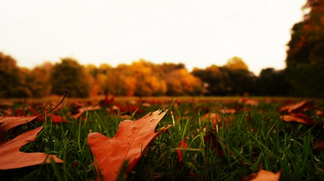 autumn-autumn-leaves-blur-217027.jpg