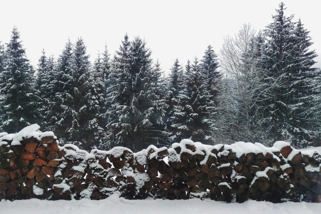 christmas-cold-conifer-849412.jpg